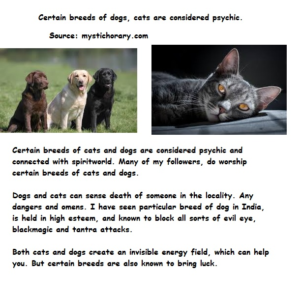 cats dogs astrology