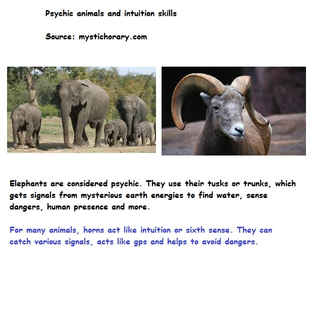 elephants goats intuition