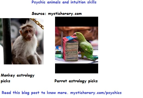 psychic animals and intuition skills